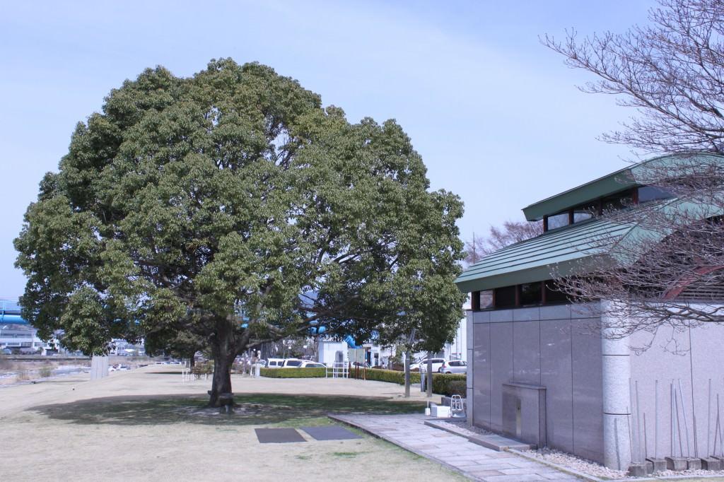 〇IMG_9204