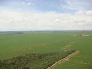 広大なアルゼンチンの畑