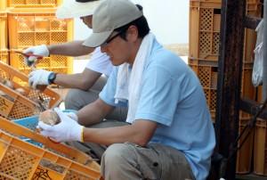 淡路島で玉ねぎ収穫を手伝う川口さん