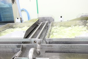 工場見学 カット野菜洗浄機